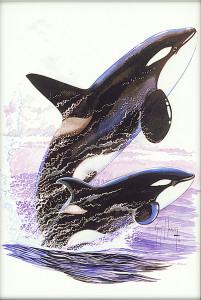 """Killer Whales Jumping""(2015), Guy Harvey"
